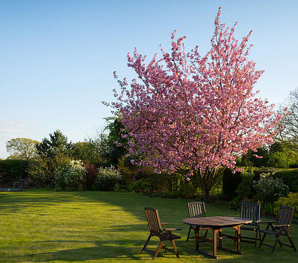back-yard-garden