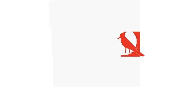 Rate Bird